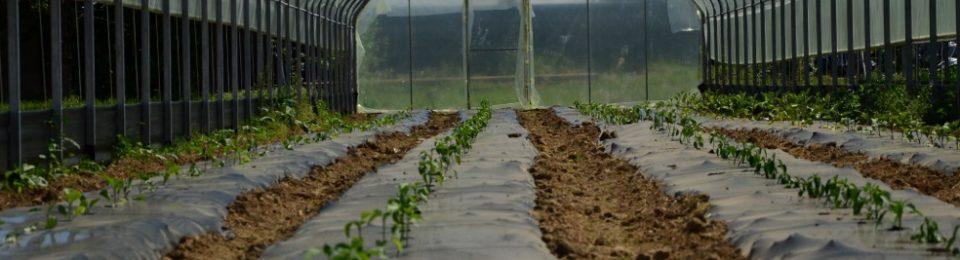 Corso di Agricoltura Sociale: I Buoni Frutti