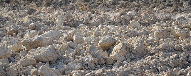 Un anno di Rete CepEA: etica, ambiente, clima e suolo