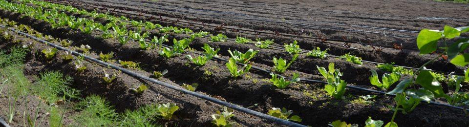 Con l'agricoltura sociale, più produzione biologica ed ecocompatibile